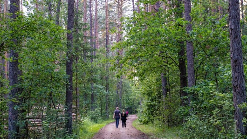 skog dejt aktiviteter